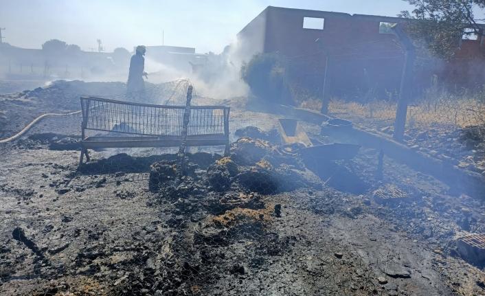 Havran'da yangında 15 koyun bir kuzu telef oldu