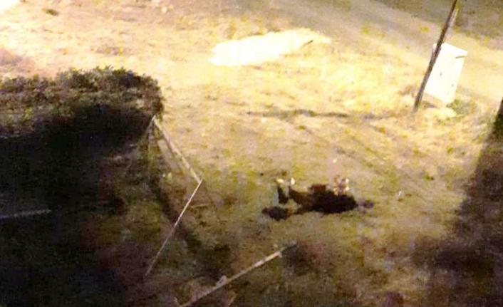 Ayvalık'ta başıboş hayvanlar tehlike saçıyor