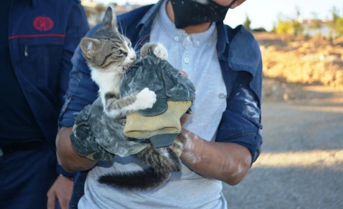 Yavru kediyi kurtarmak için lüks aracı parçalamaya kalkıştılar
