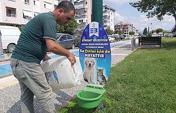 Sokaktaki canlar susuz kalmıyor