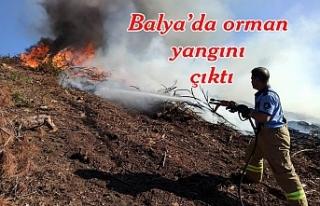 Orman yangını çıktı