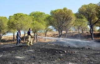 Ayvalık'ta orman yangına anında müdahale