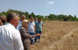 Türkiye'yi doyuran şehire Tarım ve Hayvancılık...