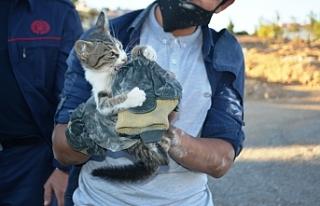 Yavru kediyi kurtarmak için lüks aracı parçalamaya...
