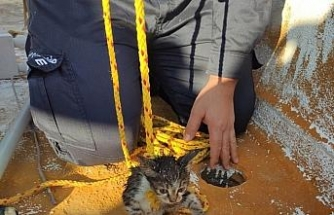 Edremit'te gidere düşen kediyi itfaiye ekipleri özel uğraşla çıkardı