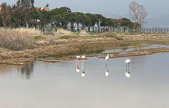 Sazlık ve sulak alanın yüz hektarı envanterden nasıl silindi?