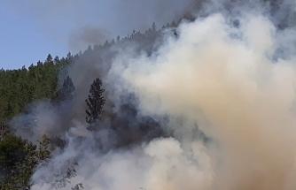 Orman yangını yürekleri ağza getirdi