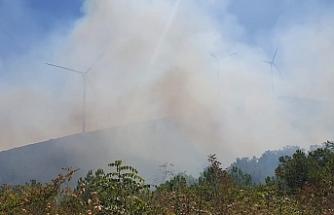 Susurluk'ta orman yangını korkuttu